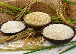 وضعیت واحدهای شالیکوبی و تولید برنج در استان فارس