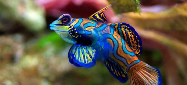 تولید بیش از ده میلیون قطعه ماهی زینتی در استان فارس