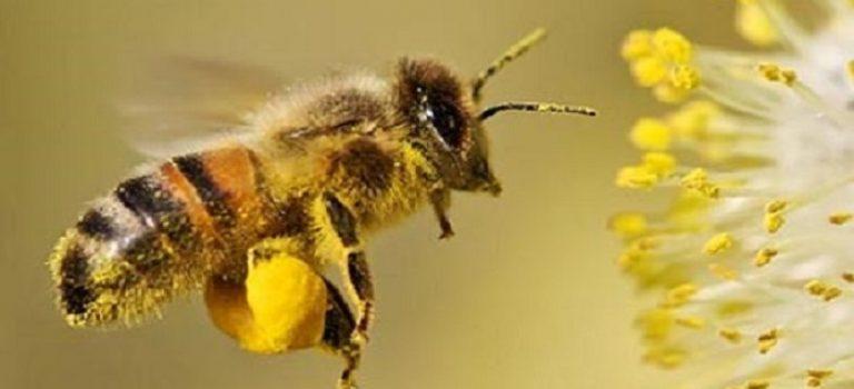 فارس رتبه سوم در تولید عسل کشور دارد