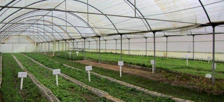 گلخانه ناجی حیات کشاورزی فارس