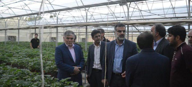تداوم حیات کشاورزی فارس با توسعه گلخانه