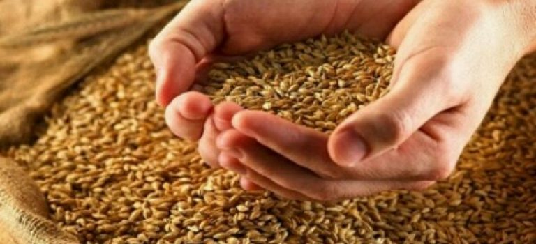 تامین ۴۵ هزار تن بذر اصلاح شده در فارس